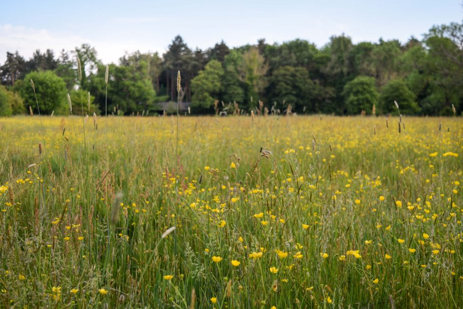 The meadow at Retreat East