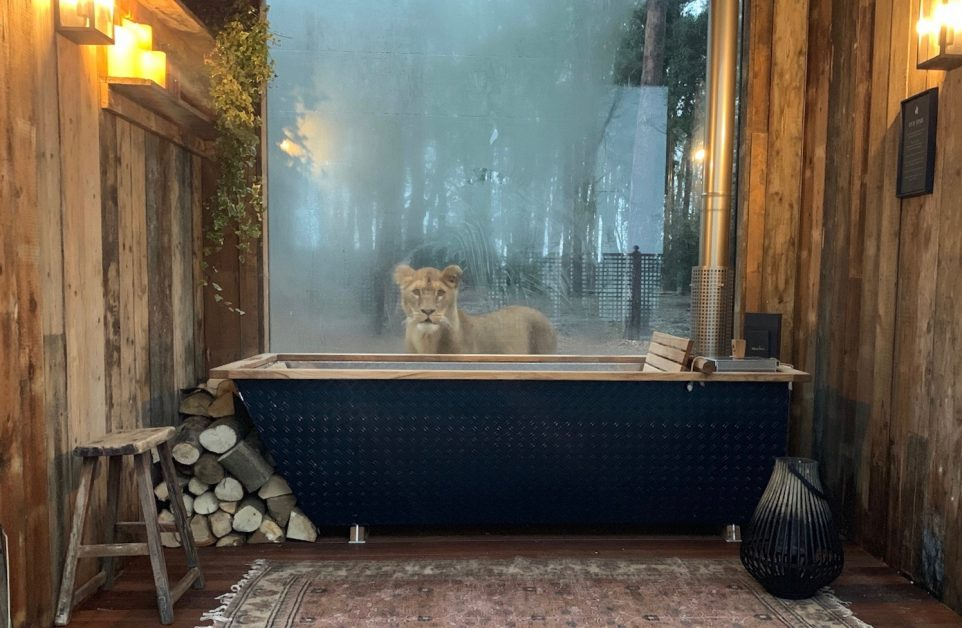 Unusual places to stay UK Lion Lodge Kent