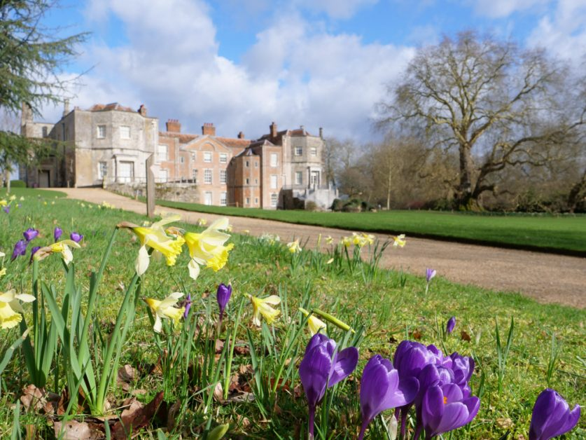best spring gardens in the UK Daffodils and crocuses in the garden at Mottisfont, Hampshire