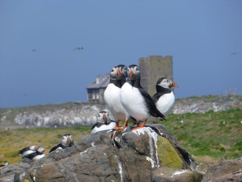 best places to see wildlife in the UK - Puffin spotting boat trip on the Farne Islands in Northumberland