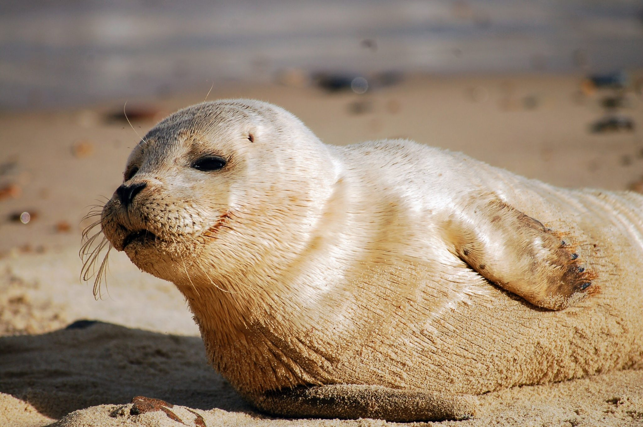 best places to see wildlife in the UK seals Norfolk