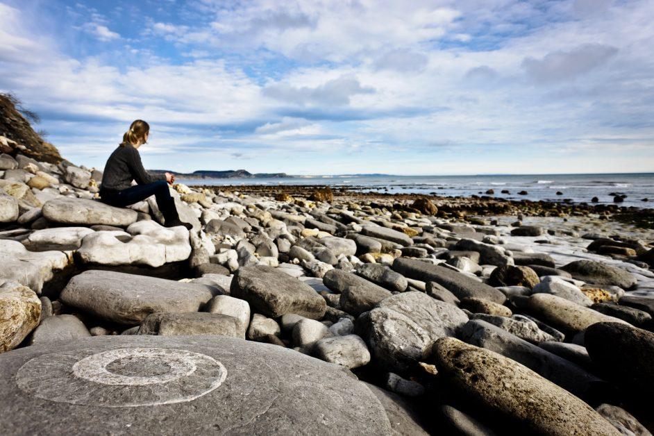 An ammonite embedded in a rock. Lyme Regis, Dorset, UK