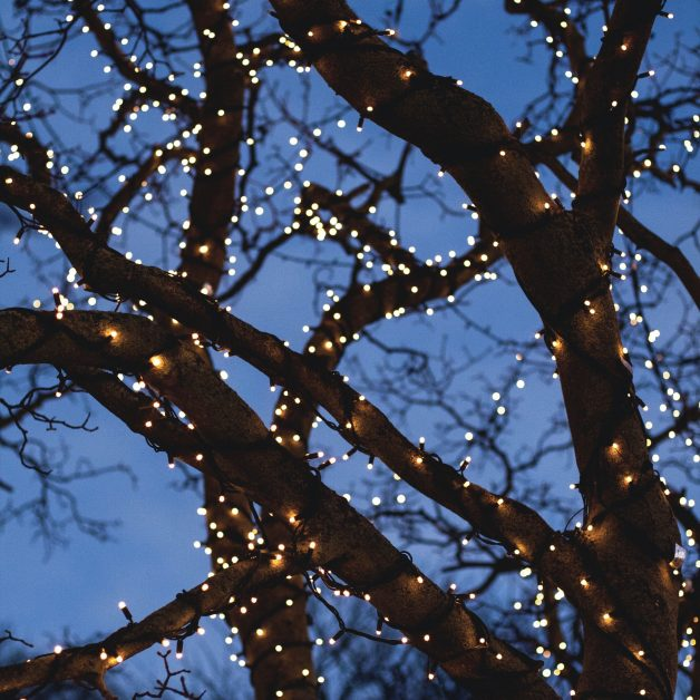 Trees with lights - how to throw a post-lockdown party